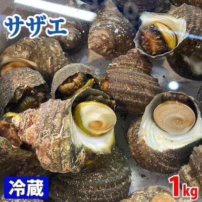 愛媛県産 (活)サザエ 約1kg(7〜10個)