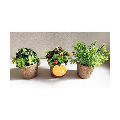 光触媒ミニグリーン マルベリー、クローバー、ファンシェイプ3種セット