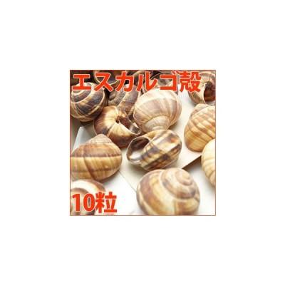 エスカルゴ殻(10粒小分け)