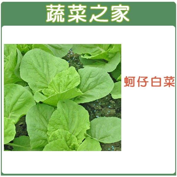 【蔬菜之家】A45.蚵仔白菜種子(共有2種包裝可選)