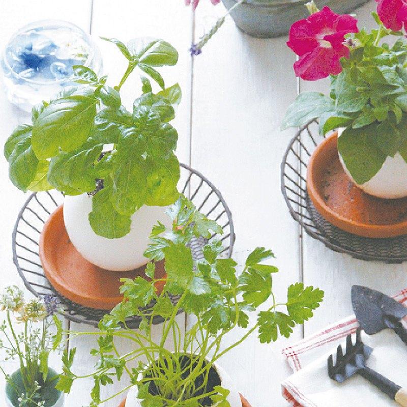 【紙盒精裝版】eggling 植物栽培蛋 / 花系列 (附陶盆)