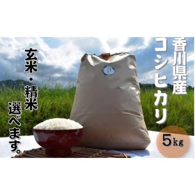 令和3年 ふじもとファームの新米予約【コシヒカリ 5kg】