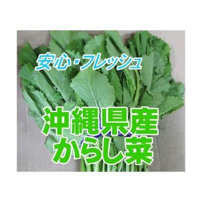 沖縄県産野菜  からし菜 約500g) 【発送 年中ですが、お待たせする場合有】