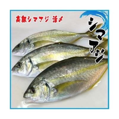 4-5人前 高級シマアジ 活〆 1-1.5kg 鯵 あじ