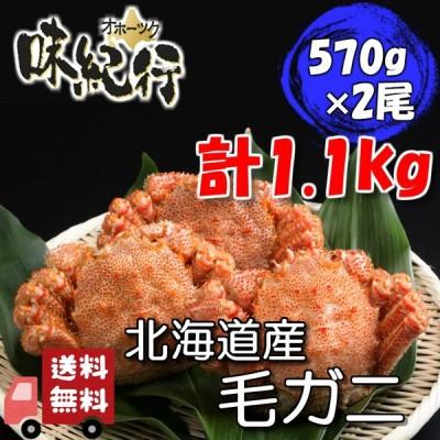 毛ガニ 北海道産 約570g×2尾入り ボイル済 送料無料 ギフト カニ かに 蟹