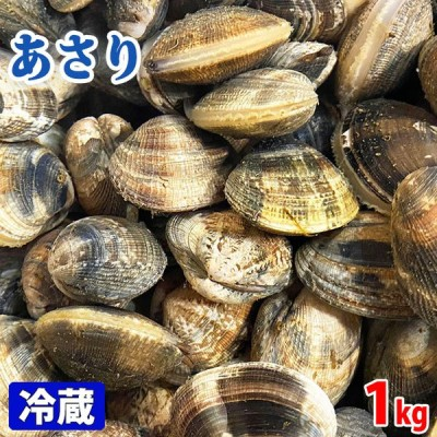 愛知県産 (活)あさり 約1kg(40〜50個前後入)
