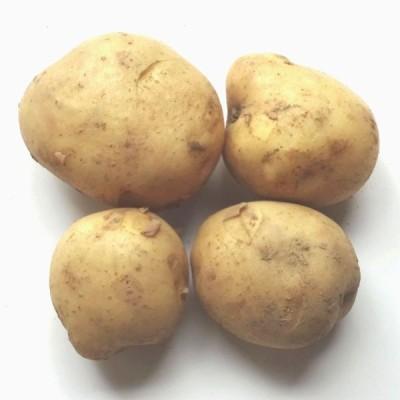 新ジャガイモ(ニシユカタ、出島等)約350g 福岡産 国内産