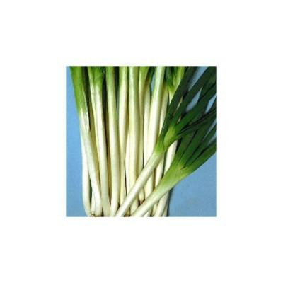 ネギの種 余目(あまるめ)一本太葱 2dl ( 野菜の種 )