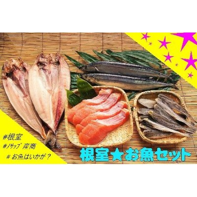 【北海道根室産】根室のお魚セットA B-59007