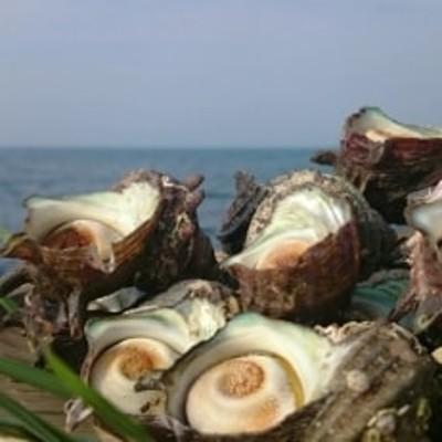 日本海天然・さざえ1kg