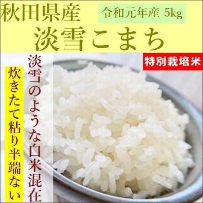 米 5kg 淡雪こまち お米 秋田県産 令和2年産
