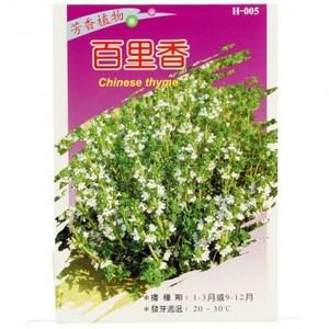香草種子-百里香