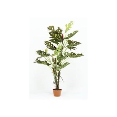 フジボウエキ 観葉植物 スフ゜リット 22 グリーン グリーンデコ鉢付 52667 17619