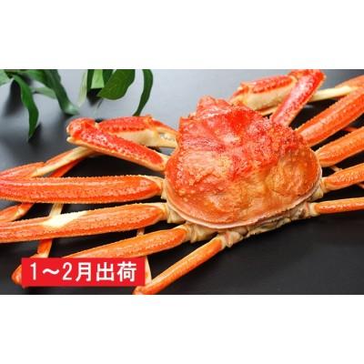 日本海で獲れた天然ズワイガニ(700~800g以上)