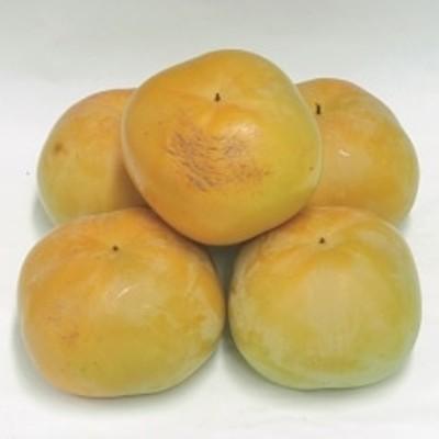 【2021年9~10月発送】太秋柿 約3kg