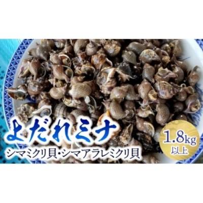 よだれミナ(シマミクリ貝・シマアラレミクリ貝)