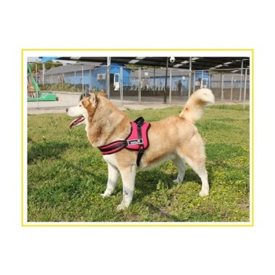 新品Red Padded Service Dog Harness W/handle (Extra Large  Chest measurement is 31-43 inches)並行輸入品
