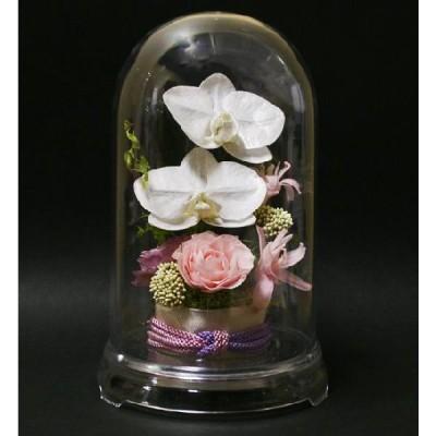 プリザーブドフラワー花和風胡蝶蘭とチュベローズのドーム入アレンジ蝶々
