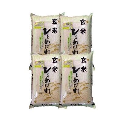 福島県会津産 玄米 石抜き処理済 ひとめぼれ 20kg(5kg×4袋) 令和元年産