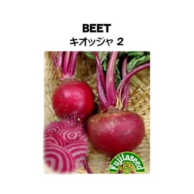 野菜 タネ 種 ビーツ キオッジャ2 藤田種子