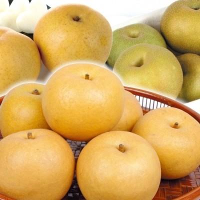 梨 山形産 庄内おまかせ和梨 5kg 1箱 送料無料 食品 国華園