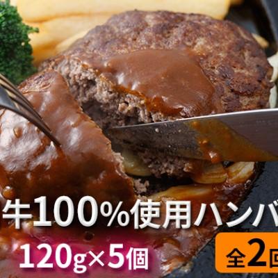 肉のあさひ 登別牛100%使用ハンバーグ 120g×5個[全2回お届け]