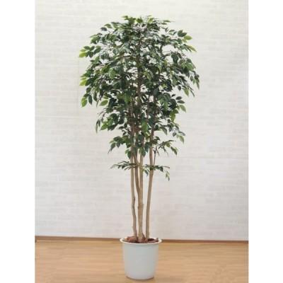 ナチュラルベンジャミン 上広がりバージョン (鉢植え 造花 観葉植物 室内 おしゃれ 大型 インテリア グリーン 200cm)