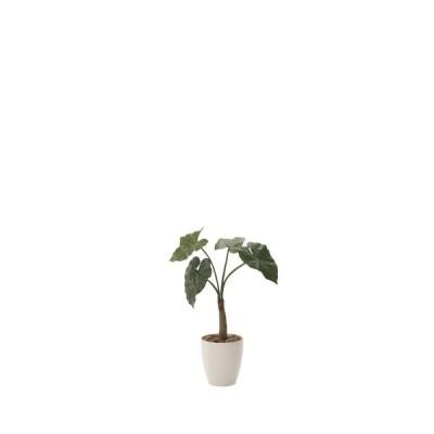 光触媒観葉植物 くわず芋78 フロアタイプ ハイサイズ 光触媒 観葉植物 フェイクグリーン 花 開店祝い 開業祝い 誕生祝い 造花 おしゃれ