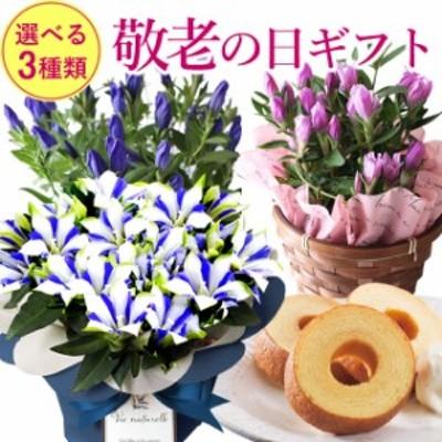 遅れてごめんね!敬老の日ギフト 花とセット 敬老の日 花とスイーツセット 選べる鉢植え 白寿 りんどう  送料無料