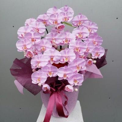 胡蝶蘭M5Fライトパープル(造花)(高約70cm×幅40cm)(光触媒コーティング)