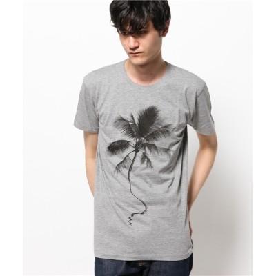 tシャツ Tシャツ S/B SURF BRAND プリントTシャツ