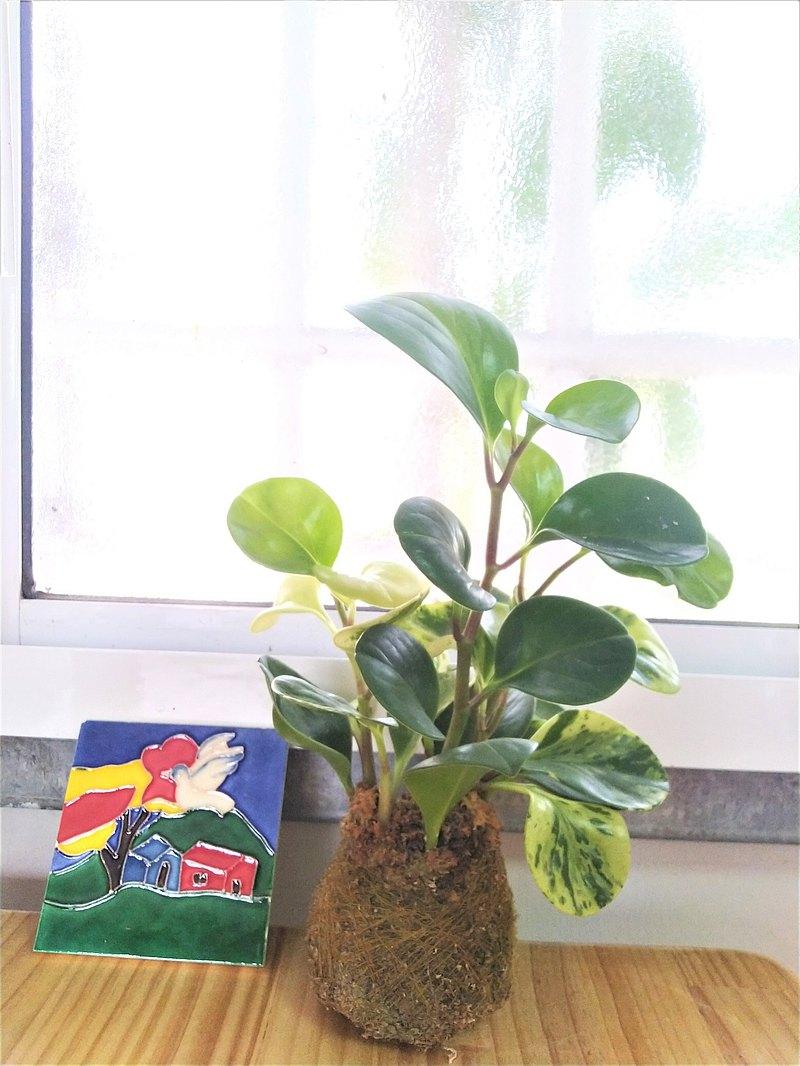 【開館特賣&限量組合】室內苔球_斑葉椒草+手繪絕版花磚底座