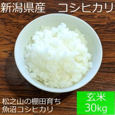 新潟県 十日町市産 魚沼コシヒカリ 新宅棚田米 令和2年産 玄米 30kg