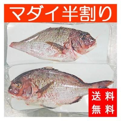 送料無料 国産マダイ半割り 真鯛 鍋 具材 魚介類