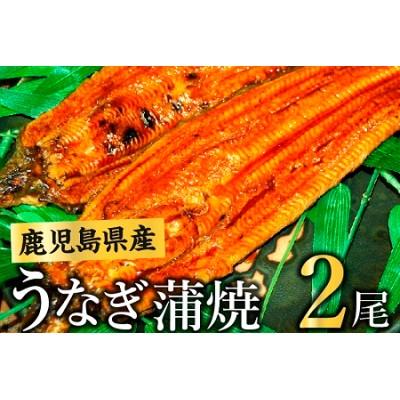 008-55 鹿児島県産うなぎ蒲焼2尾
