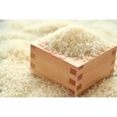 いくさかのお米 5kg 白米 こしひかり コシヒカリ 米
