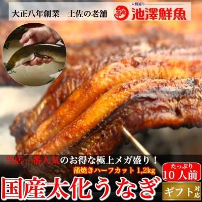 国産 蒲焼き 太化うなぎ 超特大 極上メガ盛り ハーフカット1,2kgセット 10人前以上 送料無料