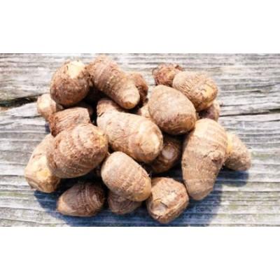 ねっとりもちもち 小郡産の里芋「白芽大吉」2.5kg ふくおかエコ農産物認証 ゆうき自然農場
