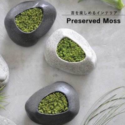 インテリア苔 GD-885 プリザードモス・石 (白または黒) 聖新陶芸