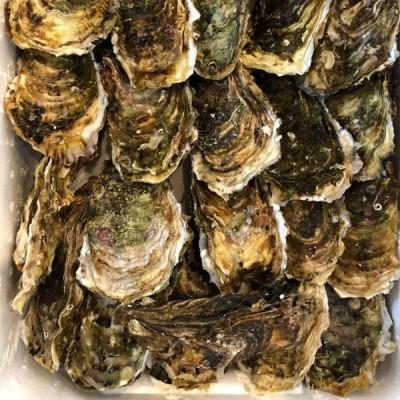 牡蠣   10個セット   岩ガキ   北海道産 期間限定特売