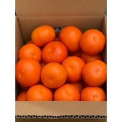 セミノールオレンジ フリーサイズ(М~2L) 約3kg
