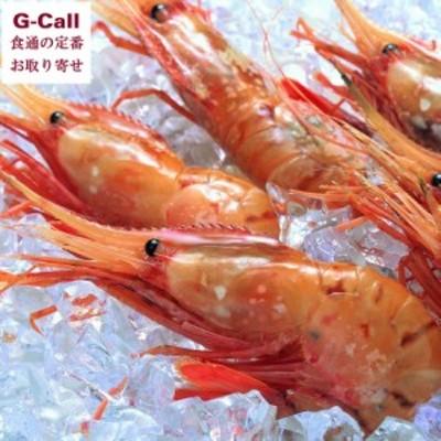 特大お刺身ぼたんえび 500g×2パック 北海道網走水産 徳用 ぼたん海老 牡丹海老 ボタンエビ