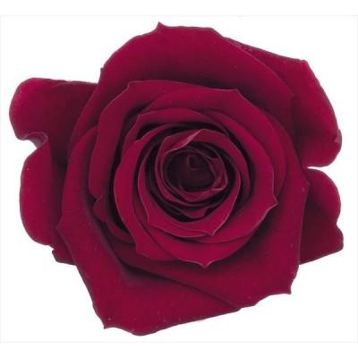 プリザーブドフラワー 花材 ミミ ワインレッド 小分け 1輪