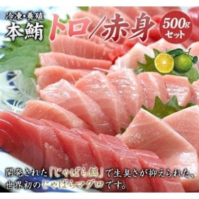 【串本町×北山村】本マグロ(養殖)トロ&赤身セット500g