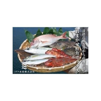 ふるさと納税 EW02◇淡路島由良港から産地直送!おまかせ鮮魚ボックスB 兵庫県洲本市