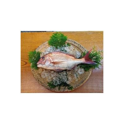 唐津市 ふるさと納税 玄海灘産天然鯛茶漬け4個入り irodoriiからつ 四季の返礼品
