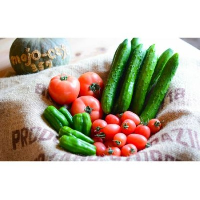 【鹿児島県産】採れたて砂丘野菜の詰め合わせ