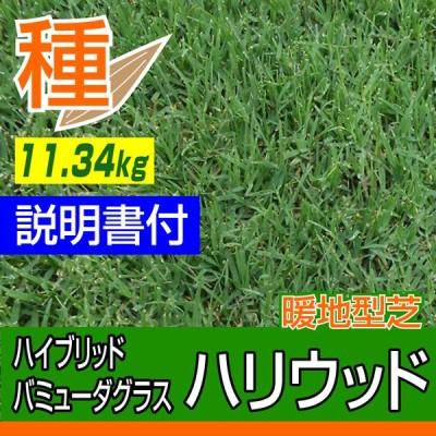 【予約注文品 約1週間で出荷】ハイブリッド・バミューダグラス ハリウッド 11.34kg入 お庭の広さ203〜305坪用 暖地型芝の種 多年草 発芽適温摂氏20度以上です。