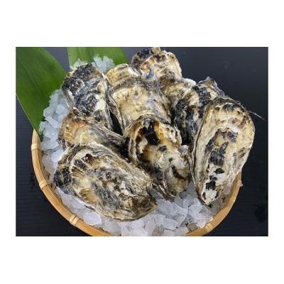 【北海道根室産】貝付き牡蠣20個[2021年4月中旬以降発送] A-54009