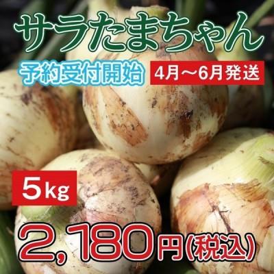 玉ねぎ/新玉ねぎ/サラダタマネギ/サラたま/サラたまちゃん5kg